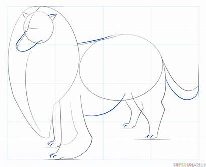 Collie Rough Draw Drawing Step Tutorials Outline
