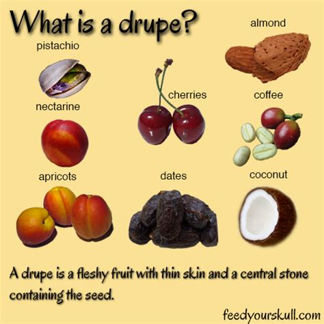 fruits with pits what is a drupe