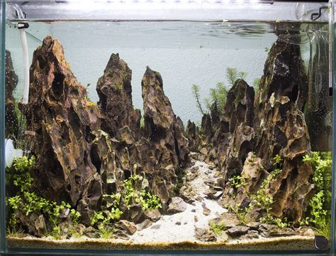 Mountain Aquascape by Mountain Day 11 Aquascape