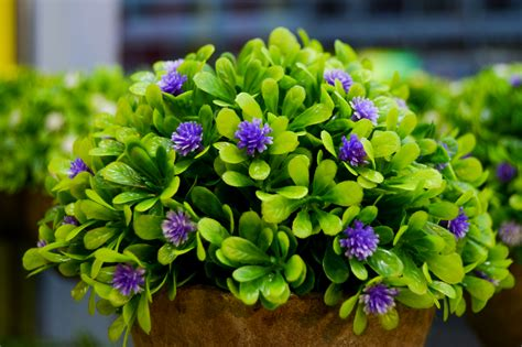 green with purple flower free stock photo of flower vase green leaves purple flowers