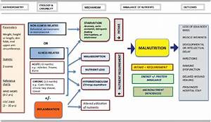 An Approach To Nutrition In The Child With Failure To Grow