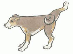 Pes si kouše zadní nohu