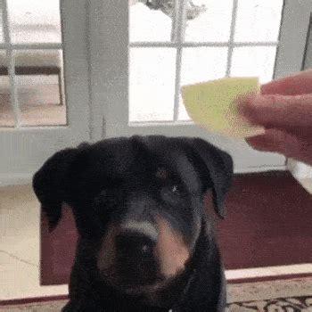 animals acting  humans  gifs