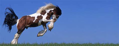 Gladiator Plus Pferd