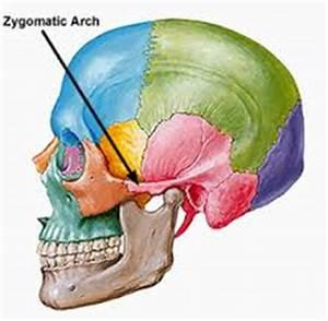 zygomatic bone Archives - MD direct