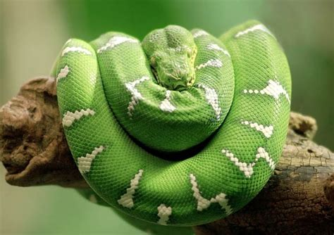 An Introduction To The Mighty Serpent