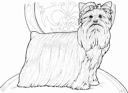 Coloring Pages Terrier Dog Pound Yorkshire