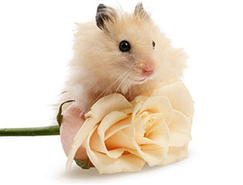 hamster names cute girl hamster names