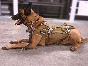 Frog dog modular patrol vest spear tactical gear reviews for Rear gear dog