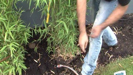 comment planter un bambou en pot comment traiter le bambou maison design goflah