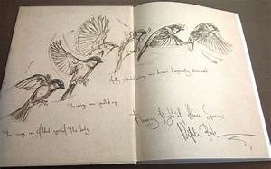 Bird Anatomy For Artists