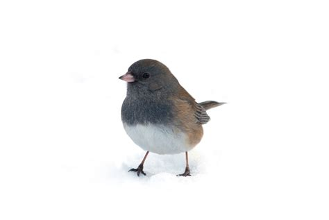 birds cold weather