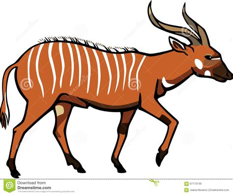 antelope cartoons illustrations vector stock images
