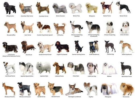dog breed classification  transfer learning