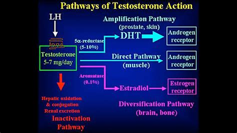 The Testosterone Toolbox  T Nation. Can Psoriasis Be Contagious Colleges In Oahu. Sports Vision Optometrist Types Of Scheduling. Market Health Insurance Jp Domain Registration. New Directions Treatment Services. Emergency Dentist Omaha Who Owns My Home Loan. Dallas County Bail Bonds Material Data Center. Electronic Security Company Free Digital Fax. Limousine Insurance Quotes Tax Amendment Form