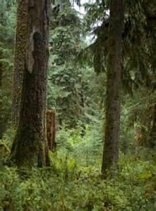 washington state tree western hemlock
