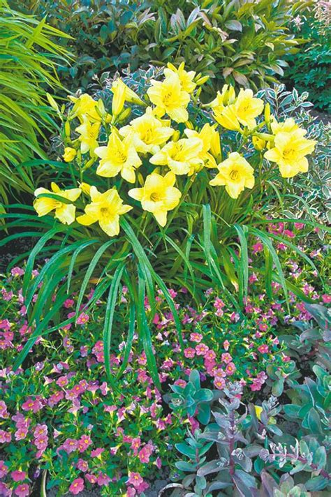 perennial flowers that bloom all summer perennials flowers that bloom all summer flowers ideas for review