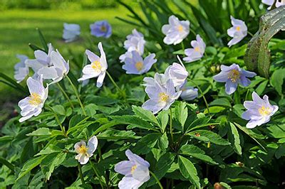 winter bloemen australie bloembollen seasons nl