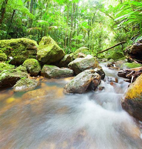 Australian Rainforest Photograph by Mburt