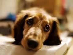 20 Sad Puppy Pictures ...Sad Puppy