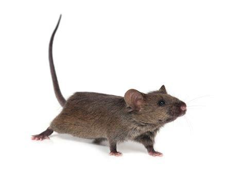 Rattenbekämpfung, Garten Unkrautvernichtershopde