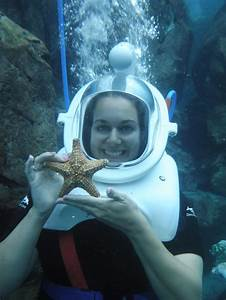 Discovery Cove Guide  Everything You Need To Know