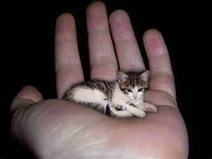 guinness world record for smallest cat