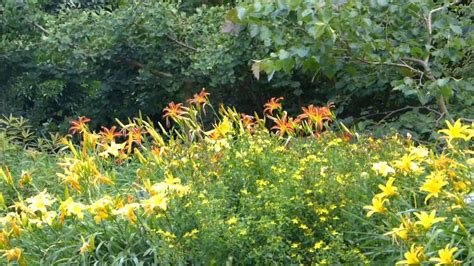 Blühende Blumen Und Pflanzen Im Botanischer Garten München