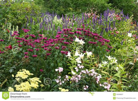 traditional garden flowers floral border in an english garden royalty free stock photography image 35308007