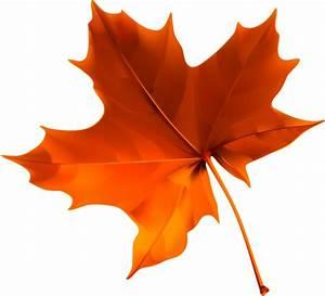 15 best Clip Art Autumn Leaves images on Pinterest ...