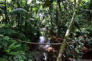 Aus Dem Dschungel In Den Dschungel : durch den dschungel zum wasserfall palau foto durch ~ A.2002-acura-tl-radio.info Haus und Dekorationen
