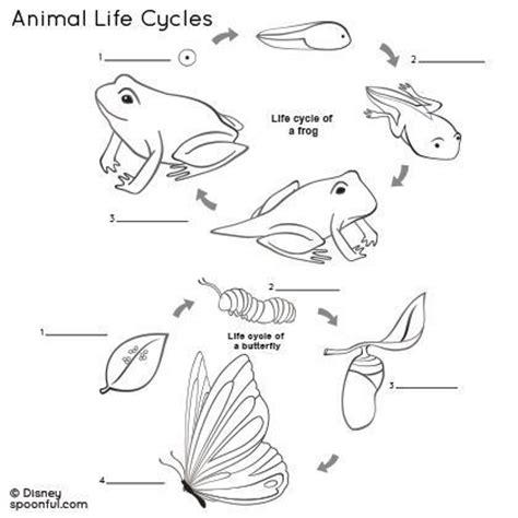 animal life cycles worksheet crafts life cycles