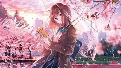 Blossom Cherry Anime 4k Wallpapers 5k Laptop