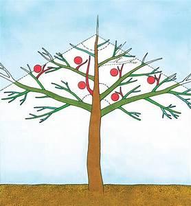 Apfelbaum Schneiden Anleitung : einen apfelbaum richtig schneiden das haus ~ Eleganceandgraceweddings.com Haus und Dekorationen