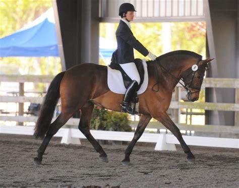 glue horse horseshoes sound soundhorse technologies