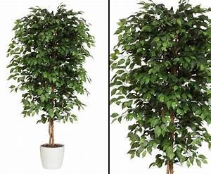 ficus benjamini kunstbaum mit 240cm gunstig bestellen With garten planen mit bonsai ficus benjamini