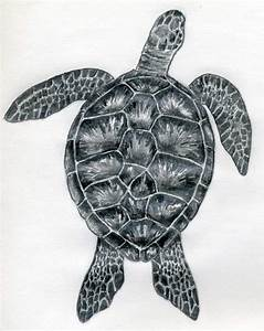How To Draw A Turtle ~ Jus 4 kidz