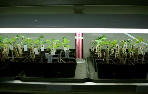 starting seeds lights seed starting basics my northern garden