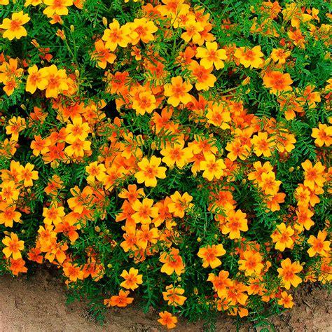 Pflegeleichte Balkonpflanzen Ganzjährig by Pflegeleichte Balkonpflanzen Ganzj 228 Hrig Balkonpflanzen