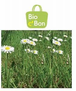 Bio C Bon Merignac : apr s le dog sitting cap sur le plant sittting ~ Dailycaller-alerts.com Idées de Décoration