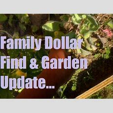 Family Dollar Find & Garden Update Youtube