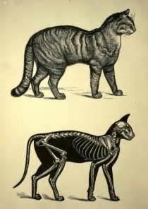 skeleton cat skeleton drawings on ap drawing skeleton
