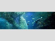Aquarium Of The Pacific Logo | auto-kfz info