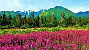 Natural landscape violet mountain flowers-pine trees ...