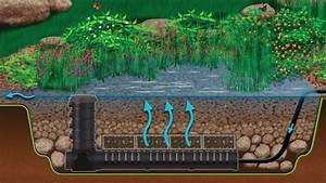 Pond Filtration Systems  U00bb Platinum Ponds  U0026 Landscaping