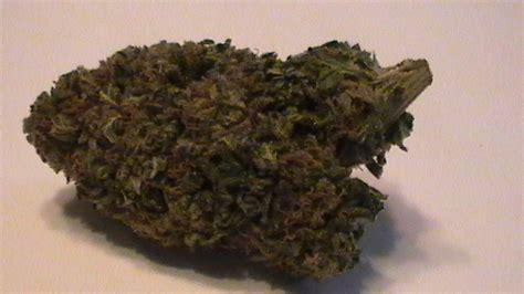 strain reviews presidential purple cheezel  grand