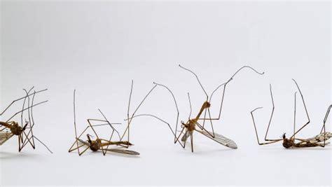 mittel gegen stechmücken mittel gegen stechm 252 cken und schnaken verlieren an wirkung