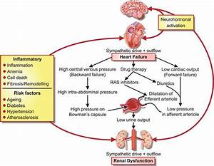 Potential Pathogenetic Pathways Linking Heart Failure With