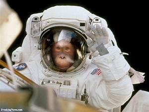 Orangutan Astronaut Pictures - Freaking News
