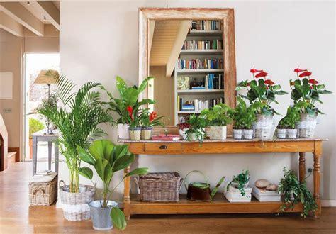una acogedora casa llena de plantas por todas partes
